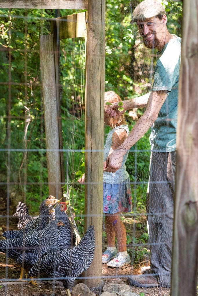 chickens and gardens