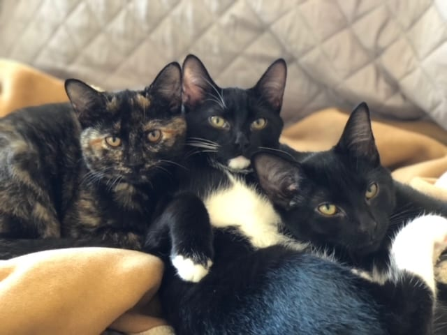 These kittens have grown together to be confident, playful and very affectionate. They instantly purr and love laying in the sun.